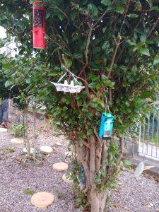 4th Class Bird Feeder Project